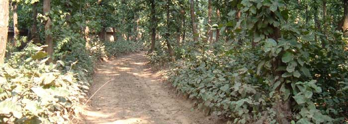 Bhawal-National-Park one of the tourist attraction of Bangladesh