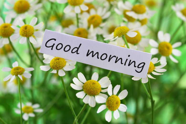 Premium Good Morning Flower Image Free Download Ontaheen
