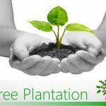 Tree Plantation Paragraph , Essay and Composition for Students