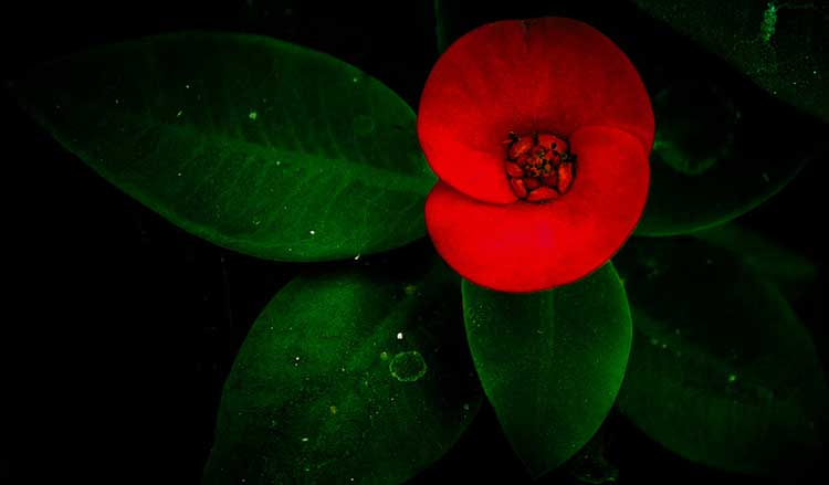 Red Green Symbol of Bangladesh