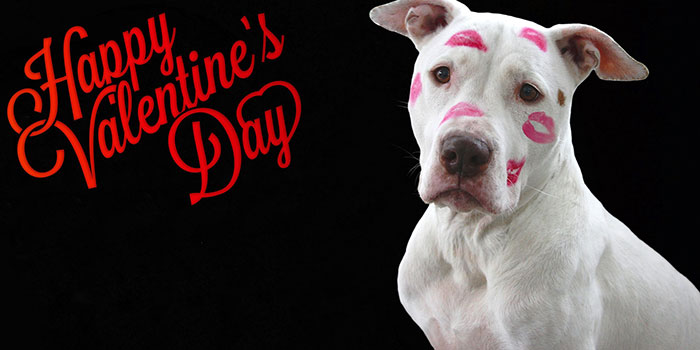 happy valentine day image with Dog