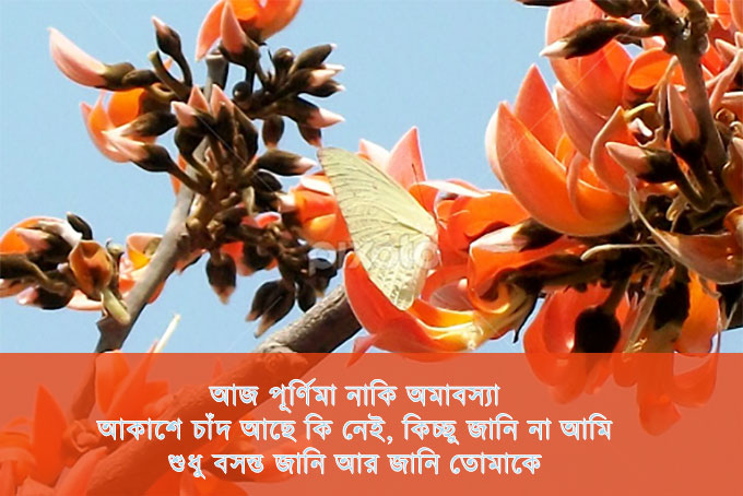 bangla falgun sms
